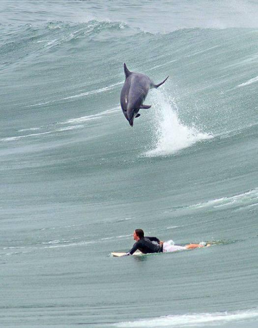 surfgolfinho