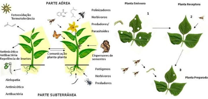 plantaautoimuni