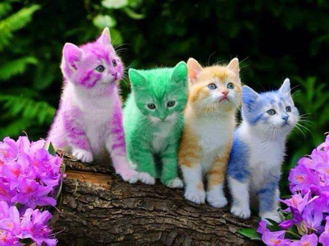 catcolor