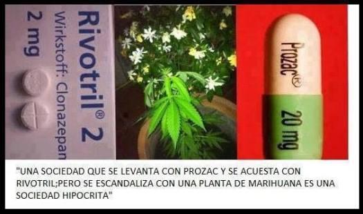prozacrivotrilhemp