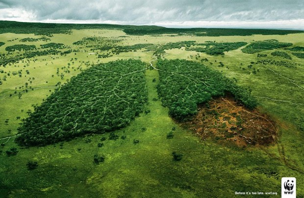 florestapulmao
