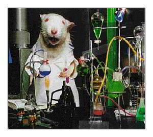 ratos-de-laboratorio