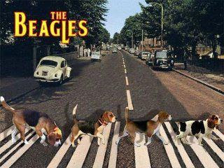 thebeagles