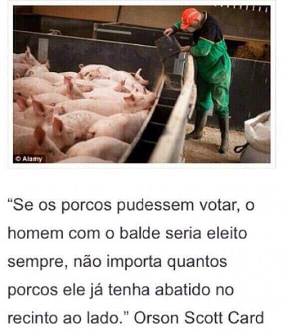 porcosxhomem