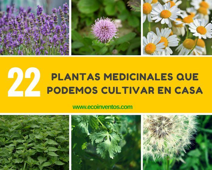 plantas-medicinales-que-podemos-cultivar-en-casa