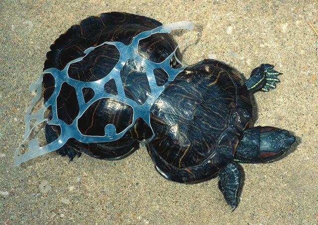 ilha-de-lixo-tataruga