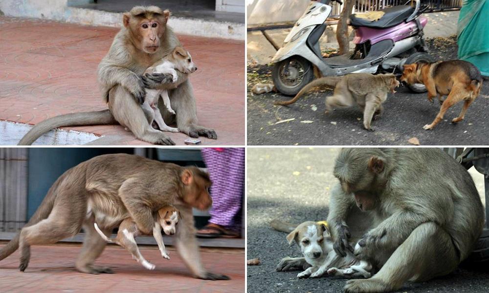 monkey-interna