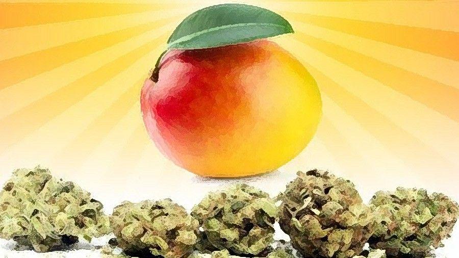 maconha-efeito-manga-cannabis-mango-smoke-buddies